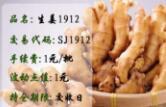 生姜1912--晚盘品种